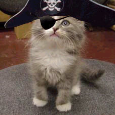 http://www.localshed.com/images/PirateCat.jpg